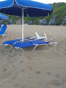 The turtle laid its nest under two sunbeds