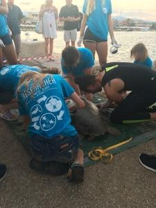 2018-10-04 Lixouri Sea Turtle Health Exam