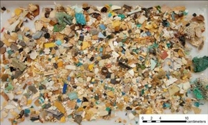 Plastics in sea turtle stomach