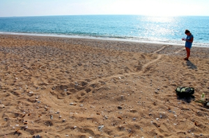 Sea turtle nest track on Skala beach